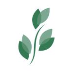 Stock BKD logo